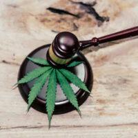 Marijuana5